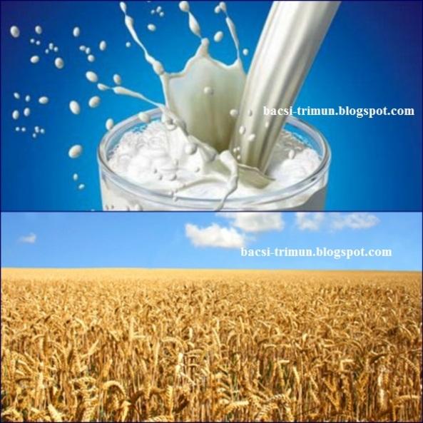 Kết hợp sữa tươi và bột yến mạch trị mụn thâm cho nam giới
